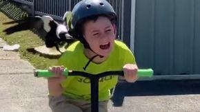 Bimbo in preda al panico viene inseguito e beccato da una gazza, scatta l'allarme in Australia