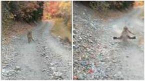 """Runner inseguito da un puma per 6 minuti sulle montagne: """"Non mi va di morire oggi"""""""