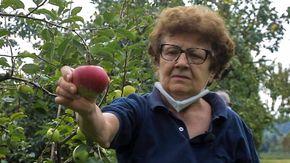 """Il 'giardino segreto' dell'ex professoressa: """"Qui proteggo il patrimonio genetico delle nostre mele"""""""