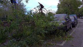 Maltempo, forte vento a Napoli: alberi caduti e danni in città