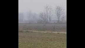 Silvano d'Orba, avvistato branco di lupi vicino al centro abitato