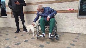 Dopo sette giorni in ospedale, un uomo rivede il suo cane che lo ha sempre aspettato fuori