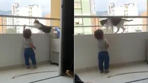 """Il bimbo si appende al balcone, ma il gatto evita il peggio. È il suo """"angelo custode"""""""