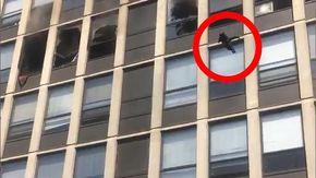 Scoppia incendio in un appartamento al quinto piano, il gatto si lancia per mettersi in salvo e ne esce senza un graffio