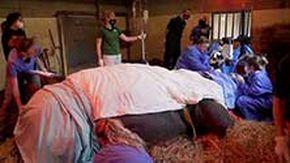 Il rinoceronte operato di cataratta: per Hugo un'anestesia che ucciderebbe 14 persone