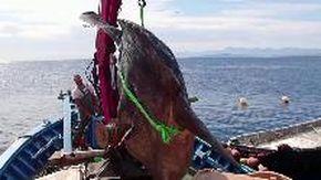 Spagna, avvistato un enorme pesce luna vicino allo stretto di Gibilterra: pesa due tonnellate