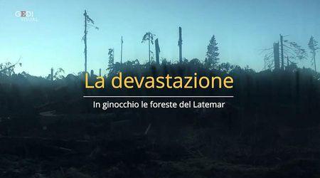 La devastazione della foresta del Latemar, rasa quasi al suolo