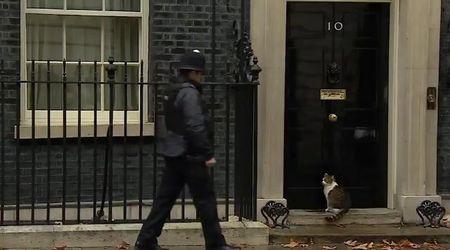Gb, il gatto più importante del Paese resta fuori dalla porta: il poliziotto è al suo servizio