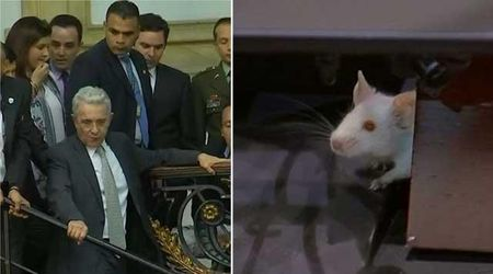 Colombia, topi in Parlamento: i deputati si rifugiano in cima alle scale, seduta sospesa
