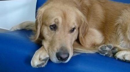 Boè, il cane di Varazze che regala felicità ai malati psichiatrici