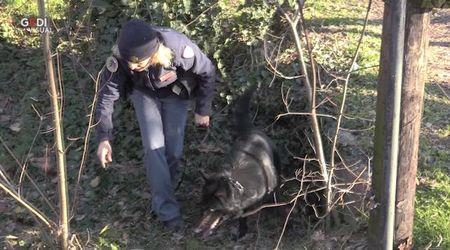 Modena, il cane Barak al parco XXII Aprile trova droga in un cespuglio