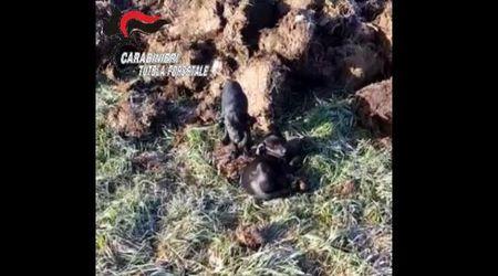 Asti, abbandonate in un campo, muoiono due cucciole: denunciato il responsabile