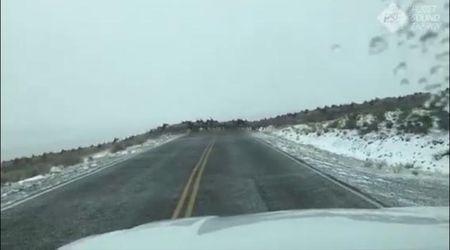 Usa, nelle terre selvagge: centinaia di alci attraversano la strada