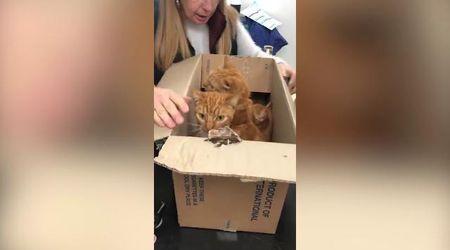 Londra, undici gatti chiusi in scatoloni sigillati: il salvataggio