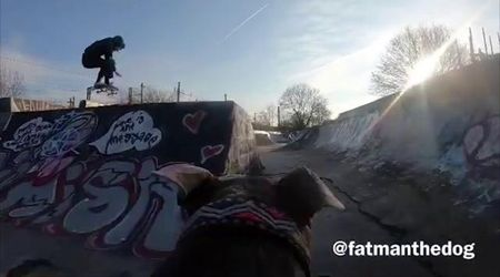 Gb, skateboarder monta videocamera sulla schiena del cane: le riprese sono perfette