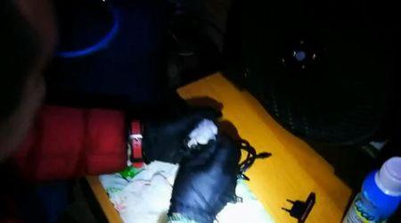 A Treviso il cane antidroga trova la cocaina nel caricabatterie del cellulare