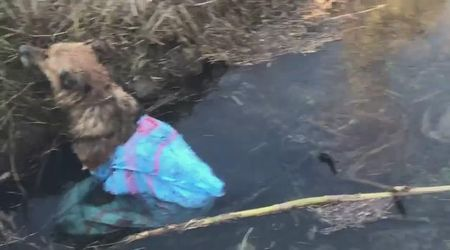 Cane legato, chiuso in un sacco e gettato in un canale: salvato dai vigili del fuoco