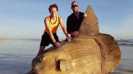 Il Big fish esiste davvero: pesce luna spiaggiato in Australia