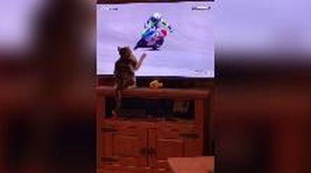 Il gatto tocca lo schermo e il pilota di MotoGP cade: l'effetto touch screen è esilarante