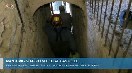 Cresce la colonia di pipistrelli che abita sotto il Castello di San Giorgio a Mantova