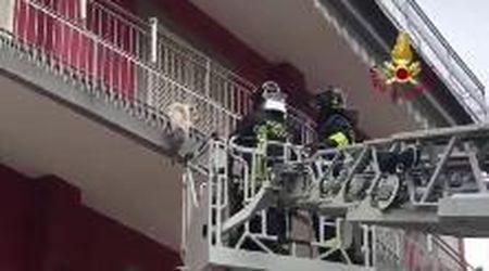 Cagnolino in bilico sul balcone: il salvataggio dei vigili del fuoco