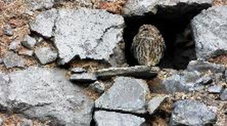 Cilento, la civetta tra vecchie mura di San Giovanni a Piro