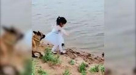 La pallina è caduta in acqua: il cane blocca la bambina e la recupera lui