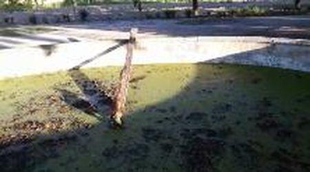 Capodimonte, i giardinieri salvano una volpe