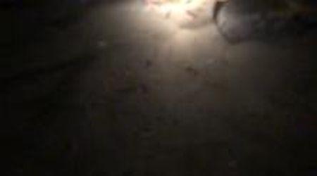 Cilento, una tartraruga depone le uova in spiaggia