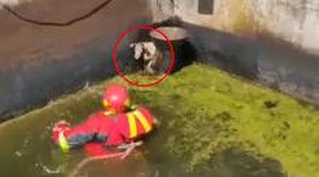 Cade nella vasca di un ex tintoria e resta bloccato per due giorni: il salvataggio del cane