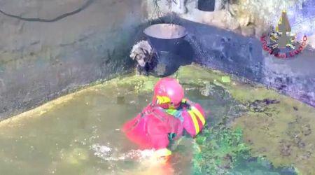 Cane rischia di annegare in un vascone, salvato dai vigili del fuoco di Biella