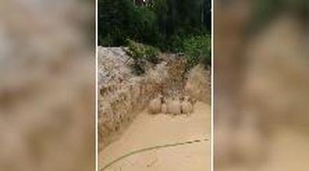 Malesia, cinque elefanti intrappolati in una fossa piena di fango: salvati grazie a un escavatore