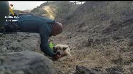 Gran Canaria, il poliziotto dà da bere con le mani al cane sopravvissuto all'incendio