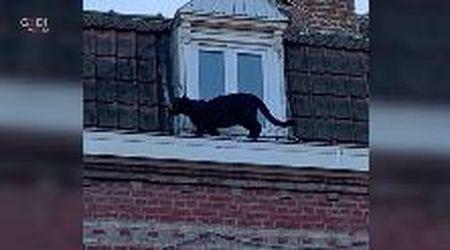 Pantera nera sul tetto: momenti di paura in Francia