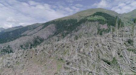 Un anno dopo la tempesta Vaia, la devastazione vista dal drone