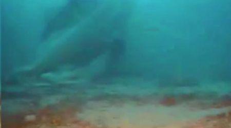 Naufragio a Lampedusa, individuati 12 corpi in fondo al mare: il video del recupero del relitto