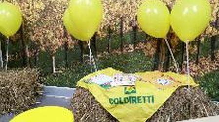 Inaugurato a Gorizia il mercato di Campagna Amica
