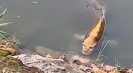 """Cina, il pesce sembra avere una """"faccia umana"""": il video è virale"""