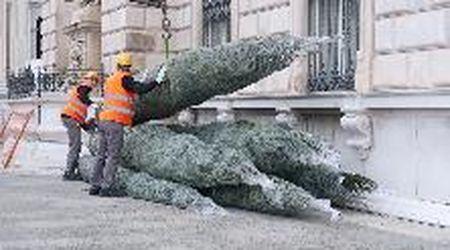 Trieste, in piazza Unità sono arrivati gli alberi natalizi croati