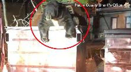 Usa, l'orso goloso rimane incastrato in un cassonetto: il salvataggio