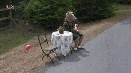 L'uomo-cavallo nelle foto di Google Maps: sui social è Bojack mania