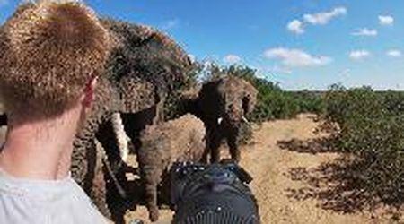 """Sudafrica, spunta branco di elefanti: """"Ci hanno lasciato in vita e non so perché"""""""