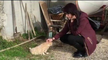 Festa per Micia, la gatta di Venturina ha compiuto 32 anni