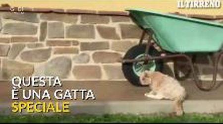 'Micia' la gatta (quasi) da Guinness: compie 32 anni e riceve una targa speciale
