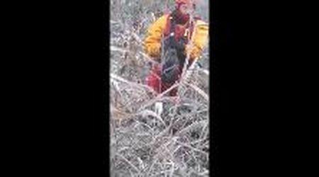Bassa reggiana, il salvataggio della gatta scampata alla piena del Po ma bloccata su un albero da dieci giorni