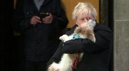 Elezioni Gb, Boris Johnson vota a Londra: il premier al seggio con il cagnolino Dilyn