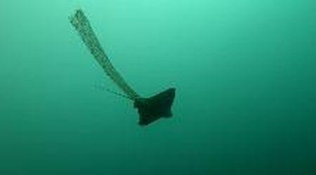Costiera sorrentina, il sub libera l'aquila di mare impigliata in una rete