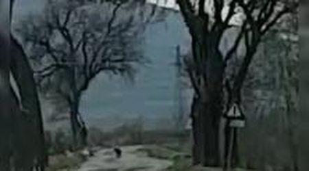 """Pantera in libertà, nuovo avvistamento nel Foggiano: """"Mamma mia, che zampone"""""""