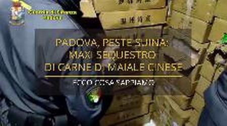 Peste suina, maxi sequestro di carne di maiale cinese a Padova: ecco cosa sappiamo