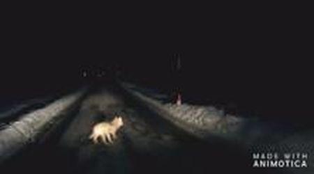 Usseglio, il lupo attraversa la strada e fugge nei campi